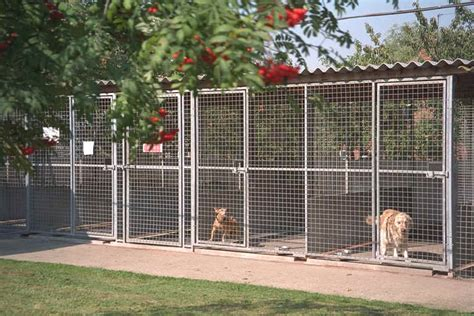 boarding kennels for dogs boarding kennels in melton mowbray leicestershire