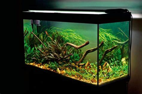 Un aquarium design pas cher   quelques idées en photos