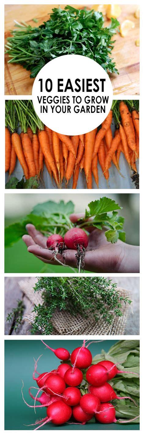 easy vegetable gardening for beginners best 25 planting vegetables ideas on
