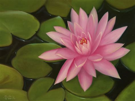 pink lotus flower painting