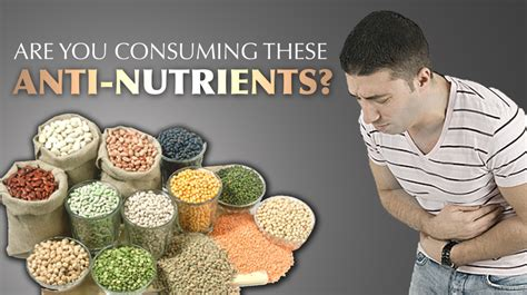 whole grains lectins paleo diet grains antinutrients in seeds coveposts
