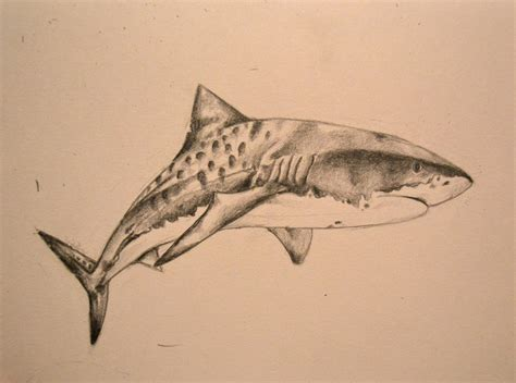40 tiger shark tattoos designs ideas