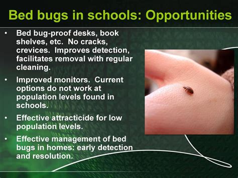 bed bugs at work bed bugs and ipm in schools challenges and opportunities