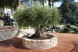 Planter Un Olivier Dans Son Jardin