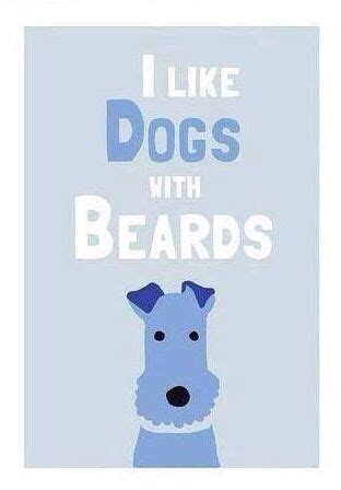 beard optionms for poodles 25 best ideas about miniature cockapoo on pinterest toy
