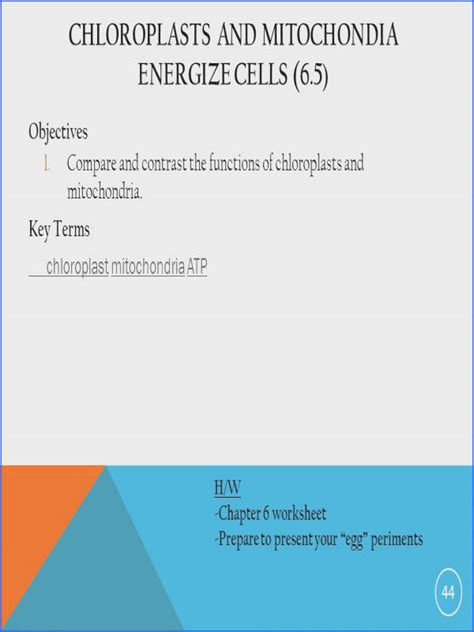 chloroplast and mitochondria worksheet answers mychaume