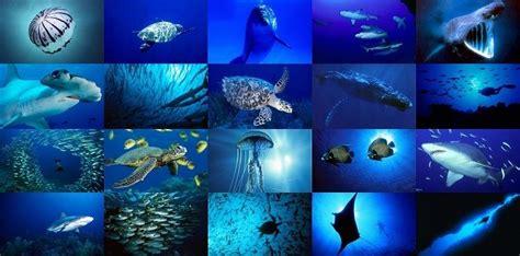 los animales marinos marine 8467535709 animales acu 225 ticos nombres caracter 237 sticas y qu 233 comen animalesde net