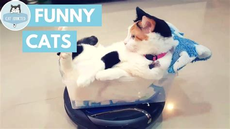 8 Ways To A Laugh At Your Cats Expense by Try Not To Laugh At This Cat Funnycat Tv