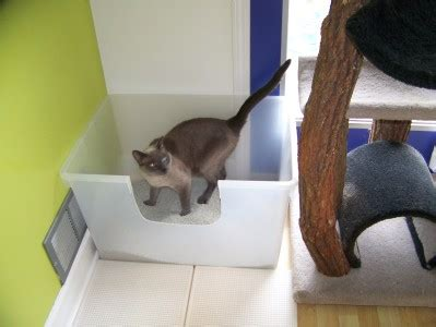 litter boxes get the scoop what how many and where