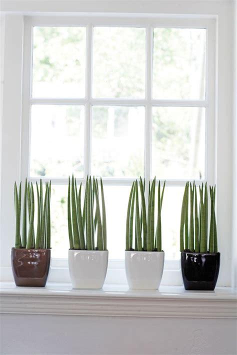 Mooie Planten Voor Binnen by Planten In De Vensterbank Interieur Insider