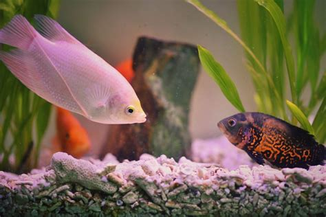 Spring Decorating Ideas For The Home by How Many Fish Will My Aquarium Hold