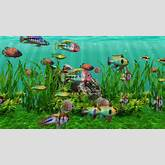 Fresh+Aquarium+Supplies ... fresh water fish, fresh water aquariums ...