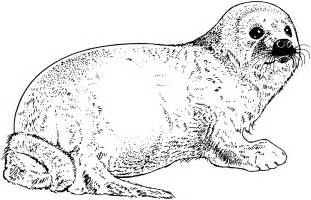 Free Seal Coloring Pages sketch template
