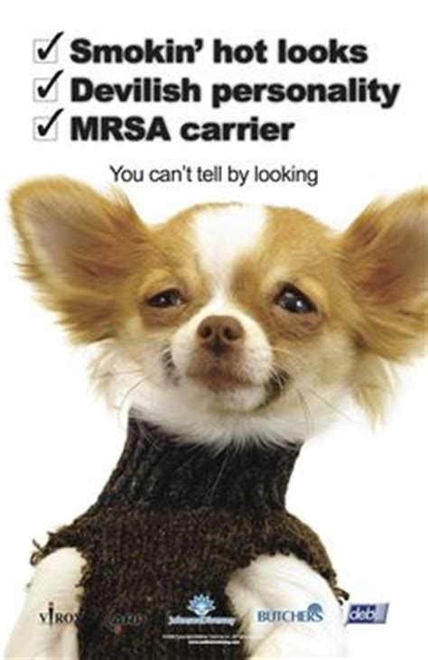can dogs get mrsa mrsa my nightmare on treatments tea tree and