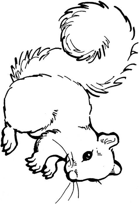 anatomy of animals coloring book squirrel coloring page animals town animals color