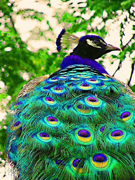 Painting 200x80cm 2 Peacock 17 best images about birds peacocks on the white sri lanka and the