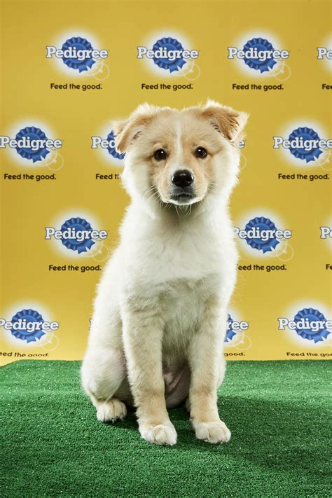 puppy bowl puppies 2017 these 2017 puppy bowl dogs are all adoptable fur real going viral zimbio