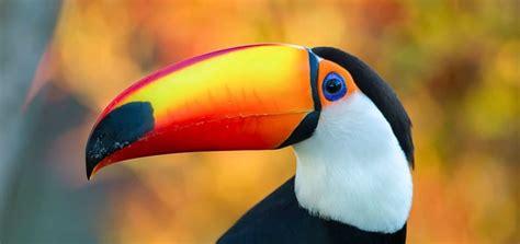 toucan ringtone ringtone   animal ringtones
