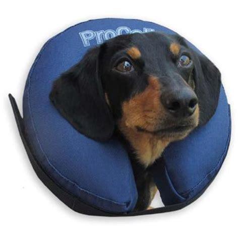 elizabethan collar for dogs elizabethan collar