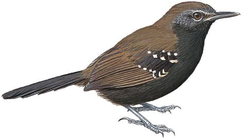 new year new birds 10 newly recognised species
