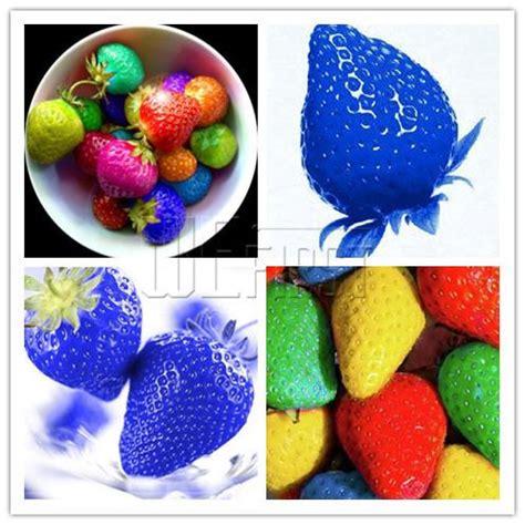 C R E A M Viii Strawberry Pound Cake Ejm 1 2018 heirloom 200 blue strawberry or 200 rainbow strawberry seeds to choose fruit for home