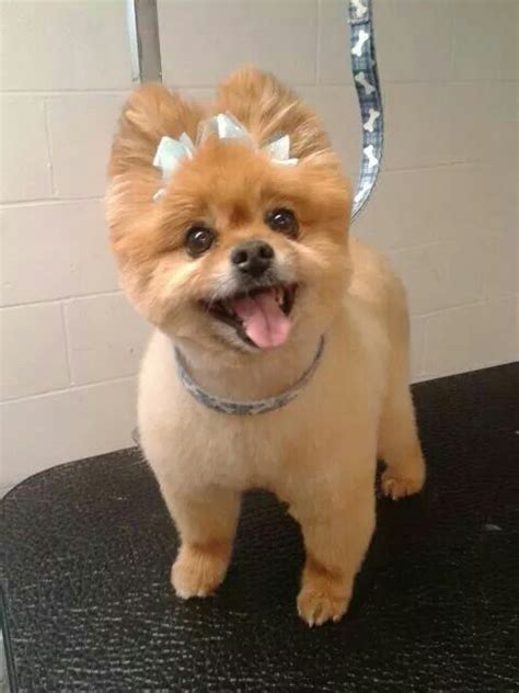 dog cut styles 28 best dog grooming by kristen images on pinterest dog