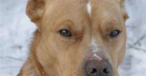 puppy giardia giardia symptoms for dogs ehow uk