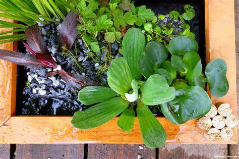 Teich F R Terrasse 978 by Mini Teich Bepflanzen Attraktiv F 252 R Balkon Terrasse