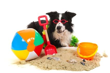 dog friendly holiday houses pet friendly holiday policy dog accommodation policy pet friendly holiday houses