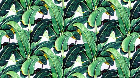 banana leaf hd wallpaper banana leaf wallpapers design martinique for the beverly