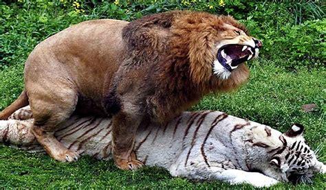 imagenes de animales wikipedia 10 animales que no sab 237 as que eran bisexuales youtube