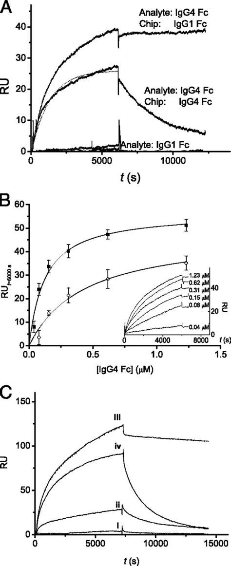 Human IgG4 Binds to IgG4 and Conformationally Altered IgG1