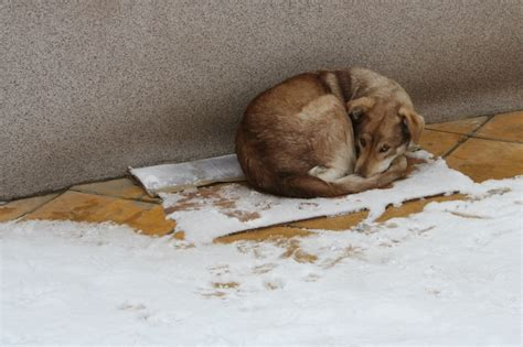 puppy cold symptoms hypothermia in dogs causes and symptoms pet care facts