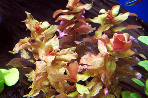 Most Difficult Plants To Grow | what are the most difficult aquatic plants to grow