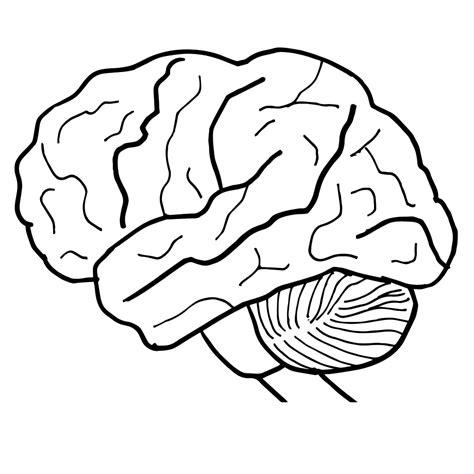 brain clipart human brain clipart cliparting