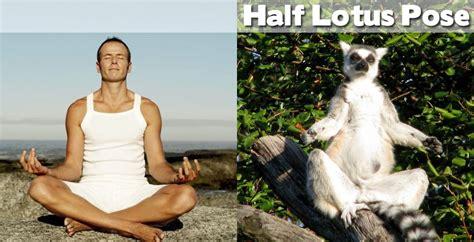imagenes relacionadas con yoga animals demonstrating funny yoga poses damn cool pictures