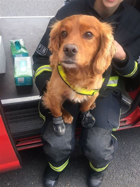 tower dogs why dogs are being used after the grenfell tower metro news