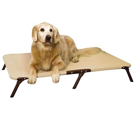 coolaroo pet bed coolaroo foldable pet bed medium