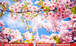 Top 10 most beautiful flowers in the world pictures to pin on