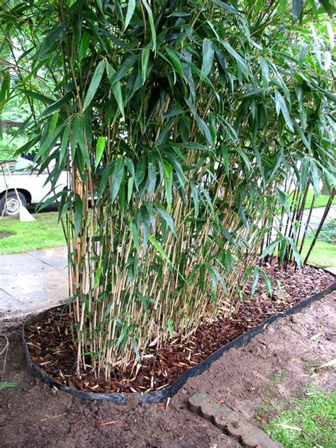 bamboo control barrier