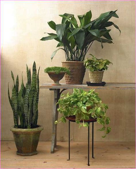 low light hanging plants indoors hanging indoor plants low light home design ideas