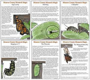 all about monarchs