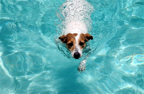 puppies swimming swimming safety tips