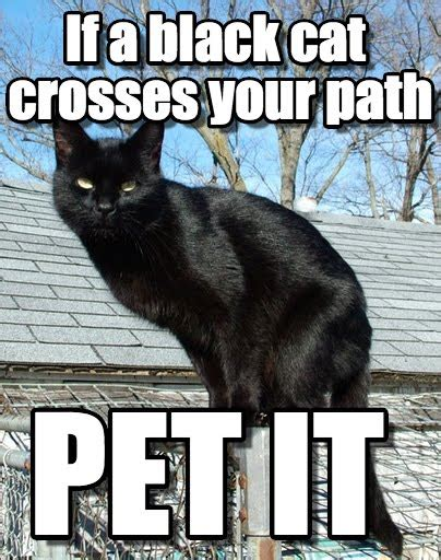 Black Cat Meme - friday the 13th cat meme www pixshark com images