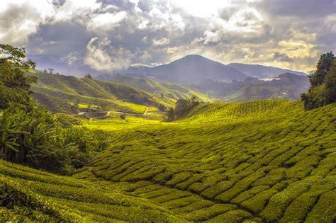 landscape hills  farms  malaysia image  stock