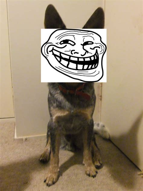 puppy troll mild mannered vertigo by day am troll am troll