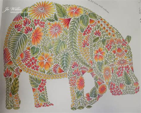 millie marotta animal kingdom colouring pinterest