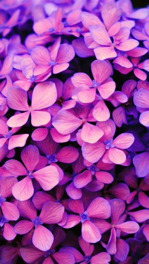 apple wallpaper purple flower 42 best i like it images on pinterest iphone