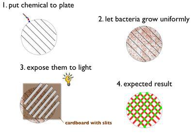 pattern lab wiki eth zurich 2006 2006 igem org
