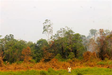 Hukum Kehutanan Di Indonesia 1 hutan konservasi hukum kehutanan the knownledge